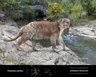 Marsupial lion (Thylacoleo carnifex)
