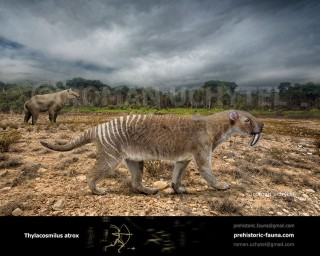 Thylacosmilus atrox (Marsupial Saber-Tooth)
