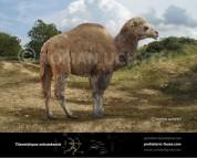 Titanotylopus nebraskensis