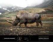 Woolly rhinoceros (Coelodonta antiquitatis)