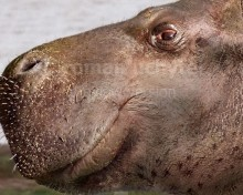 Kenyapotamus