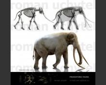 Straight-tusked elephant (Palaeoloxodon antiquus)
