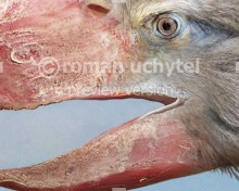 Paraphysornis brasiliensis