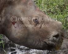 Aktautitan hippopotamopus