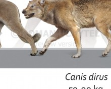 Biggest Prehistoric Mammals of NA (Carnivore), poster