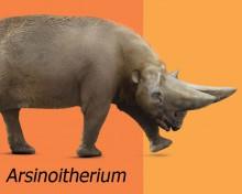 Evolution of the Paenungulata, poster