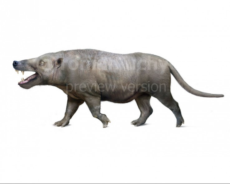 Andrewsarchus mongoliensis (white background)