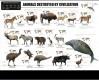 Animals destroyed by Civilization, poster