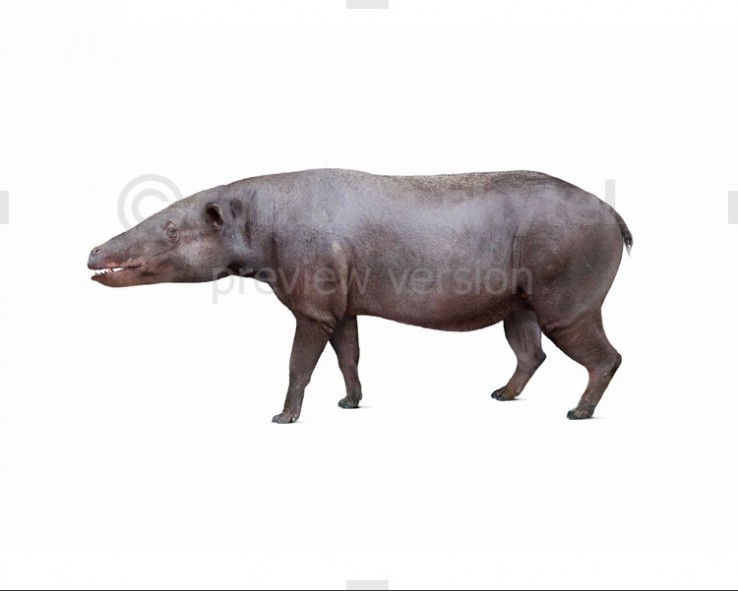 Anthracotherium (white background)