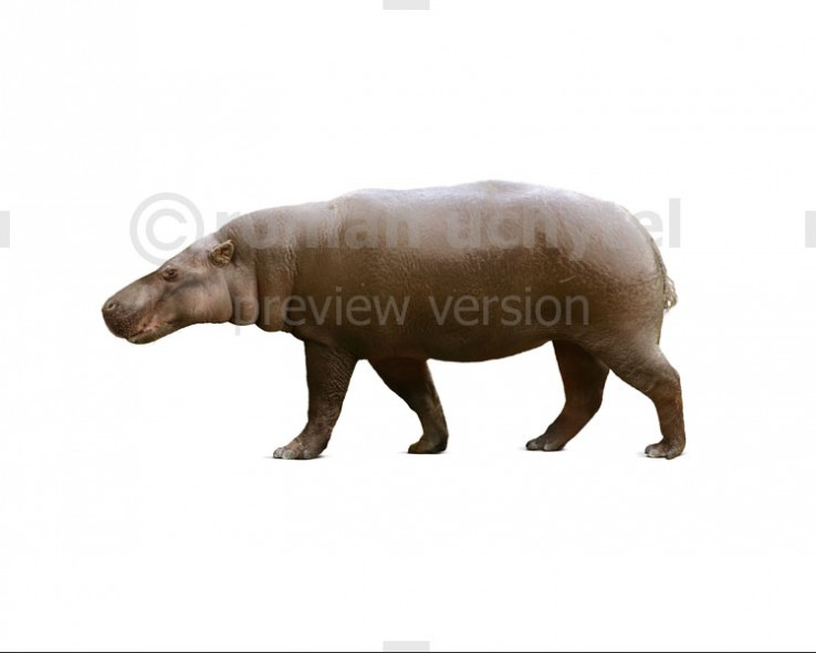 Archaeopotamus (white background)