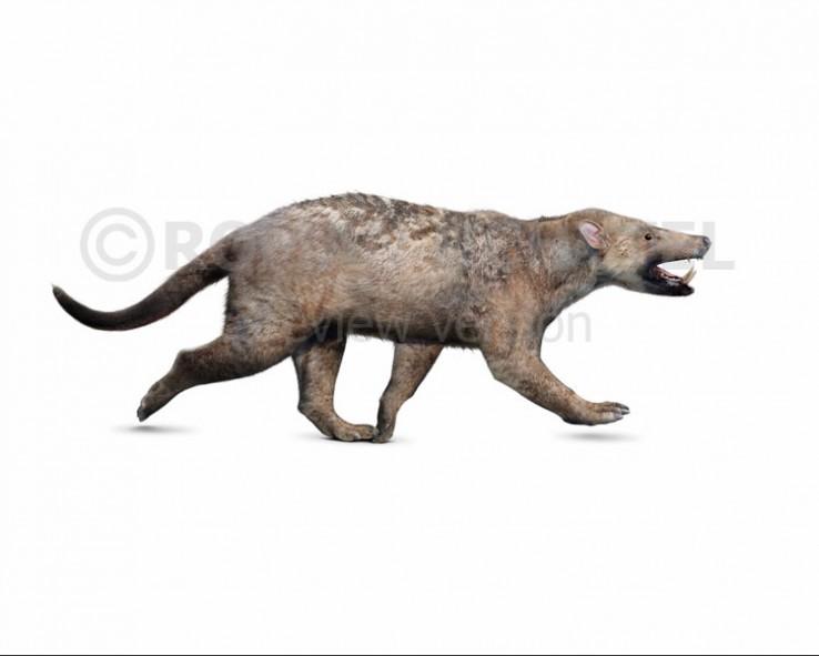 Arctocyon primaevus (white background)