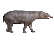 Astrapotherium magnum (white background)