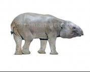 Barytherium (white background)