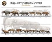 Biggest Prehistoric Mammals of East Asia (Carnivore), poster