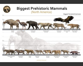 Biggest Prehistoric Mammals of NA (Carnivore), poster