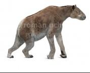 Chalicotherium (white background)