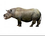 Chilotherium (white background)