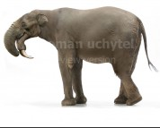 Deinotherium (white background)