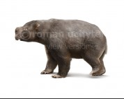 Diprotodon opatum (white background)