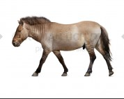Giant horse (white background)