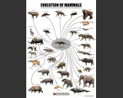Evolution of mammals, poster