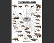 Evolution of mammals, poster