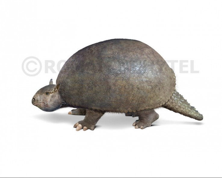 Glyptodon clavipes (white background)