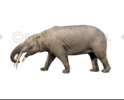 Granastrapotherium (white background)