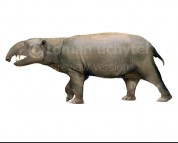 Hilarcotherium miyou (white background)