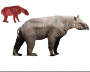 Homalodotherium (white background)