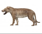 Hyaenodon gigas (white background)