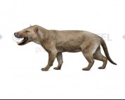Hyaenodon horridus (white background)