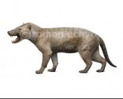 Hyaenodon horridus (white background)