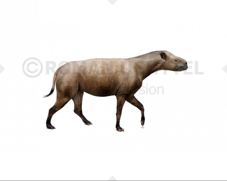 Hyracodon (white background)