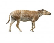 Hyracotherium (white background)