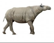 Indricotherium Borissjak (white background)