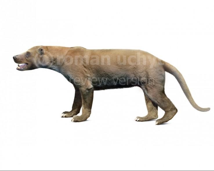 Ischyrocyon (white background)