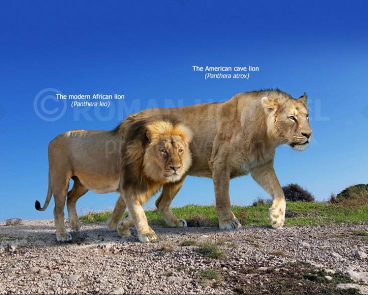 Panthera atrox and Panthera leo (size comparison)