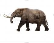 American mastodon (white background)