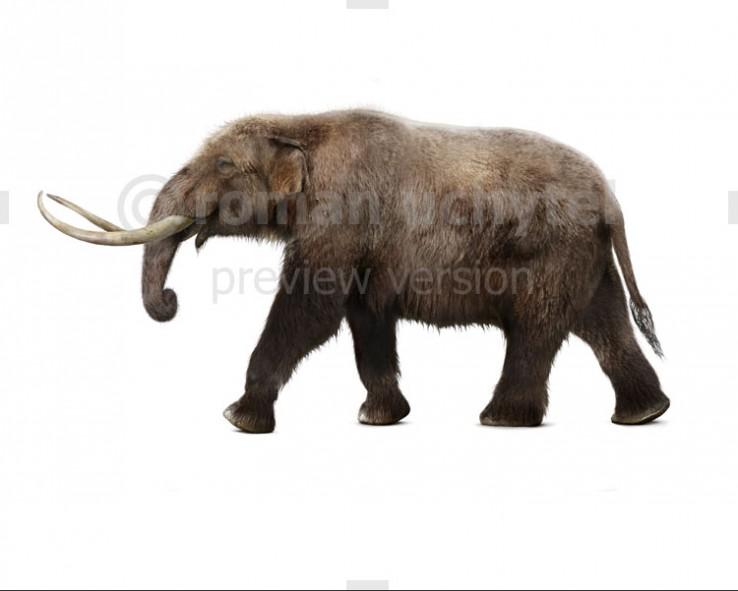 American mastodon (white background)
