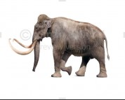 Columbian Mammoth (white background)