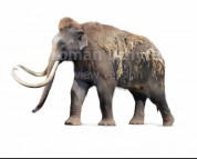 Mammuthus jeffersonii (white background)
