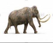Woolly Mammoth (white background)
