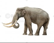 African mammoth (white background)