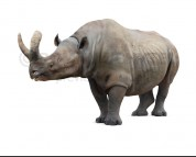 Megacerops (white background)