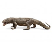 Megalania (white background)