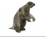 Megatherium (white background)
