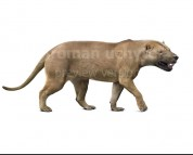 Megistotherium (white background)