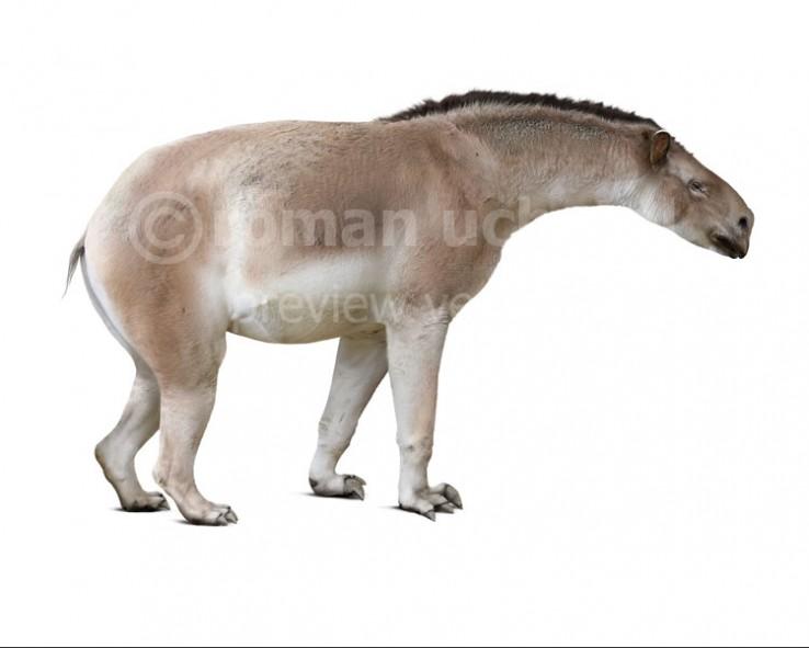 Moropus distans