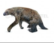 Shasta ground sloth (white background)